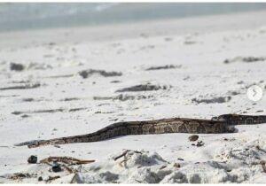 Defesa Civil de Cabo Frio alerta sobre surgimento de serpentes no município