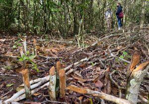 Ambientalistas denunciam retirada de vegetação nativa para construção de cemitério em Búzios