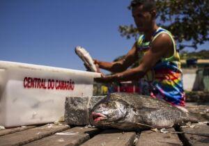 Análise científica atesta qualidade do pescado da Lagoa de Araruama