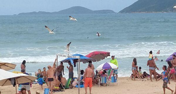 Biólogos advertem sobre prática de alimentar gaivotas no Peró