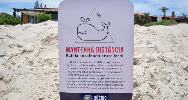 Placa indicativa de encalhe de baleia jubarte em Geribá é furtada 48 horas após instalação