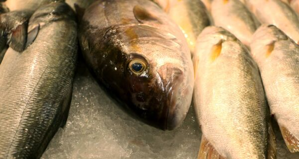 Confira dicas de consumo do pescado para as festas de fim de ano
