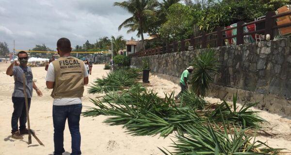 Meio Ambiente de Búzios retira plantas exóticas da faixa de areia de Geribá