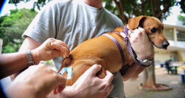 Araruama realiza Dia D de Vacinação Antirrábica neste sábado (5)