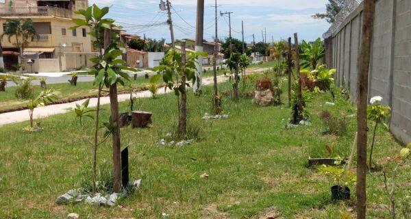 Projeto independente em São Pedro transforma área de descarte de lixo em jardim