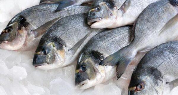 Araruama realiza quinta edição do projeto 'Feirão do Peixe da Semana Santa'
