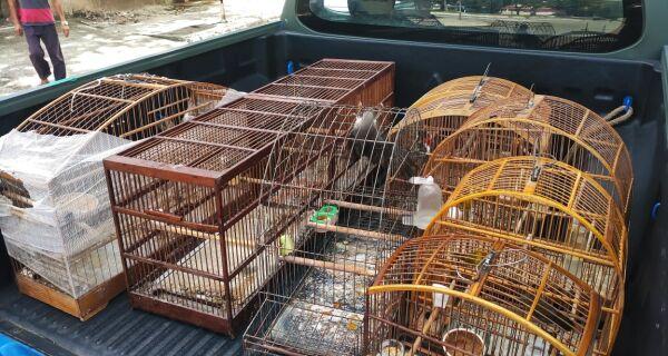 Após denúncia ao Linha Verde, 11 pássaros são resgatados de cativeiro em Cabo Frio