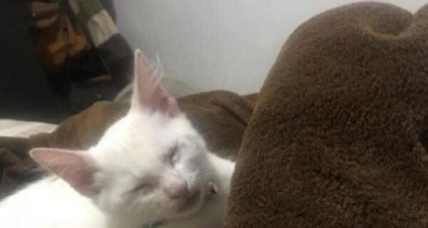 Polícia tenta identificar homem que soltou cão pitbull para atacar gato em São Pedro da Aldeia