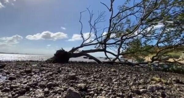 Prefeitura de Búzios decide não mexer em árvore derrubada pela força do vento no Mangue de Pedra