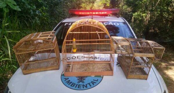 Aves Papa-capim e Tiziu são resgatadas em São Pedro da Aldeia e devolvidas à natureza