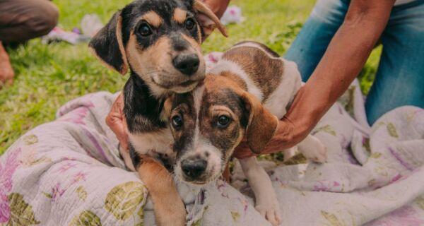 Cabo Frio mantém serviço de adoção de animais durante a pandemia