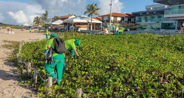 Cabo Frio recupera corredor de ipomeias na Praia do Peró