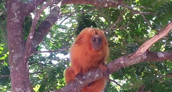 MPRJ e Cabo Frio entram com ação para remover ocupações irregulares no Parque do Mico Leão Dourado