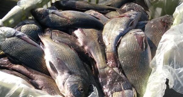Guarda Ambiental de Arraial apreende 600 Kg de pescado capturado irregularmente na Lagoa de Araruama