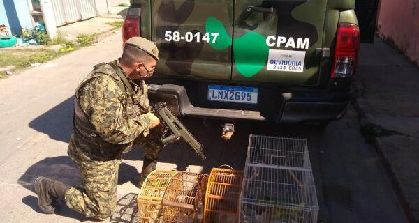 Polícia Ambiental resgata pássaros silvestres de cativeiro em Rio das Ostras