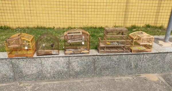 Pássaros da fauna silvestre brasileira são resgatados de cativeiro em São Pedro da Aldeia
