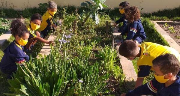 Projeto 'Horta nas Escolas'reforça o conceito de sustentabilidade entre os alunos em Araruama