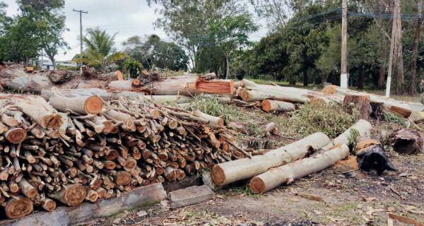 Polícia flagra corte irregular de árvores em condomínio de Araruama