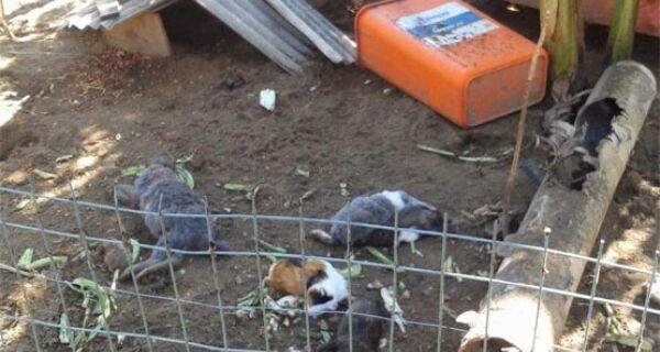 Rottweiler pode ter sido usado para matar 118 coelhos em Cabo Frio