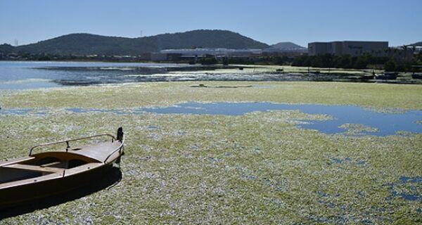 'Tapete verde' incomoda moradores