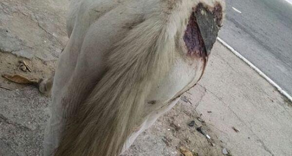 Carroceiro e dono de loja de materiais são presos por maltratar cavalo