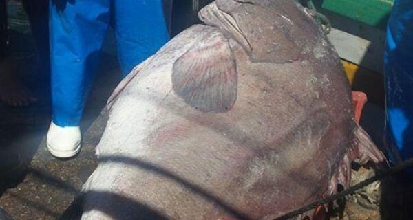 Pescadores de Arraial do Cabo fisgam peixe gigante