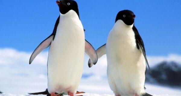 Guarda ambiental faz alerta sobre a chegada de pinguins