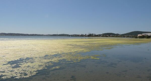 Algas voltam a proliferar na lagoa