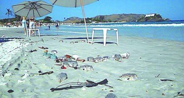 Peixes na areia do Forte em discussão