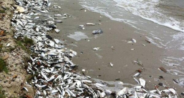 Nova mortandade de peixes na Lagoa preocupa autoridades ambientais