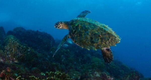 Cabo Frio sedia a partir de hoje Concurso Nacional de Fotografia Subaquática