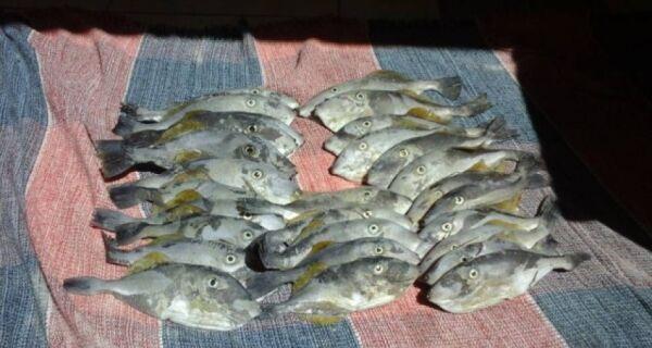 Mortandade de peixes no Peró pode ser reflexo do desastre de Mariana