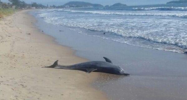 Golfinho é encontrado morto na Praia da Rasa, em Búzios