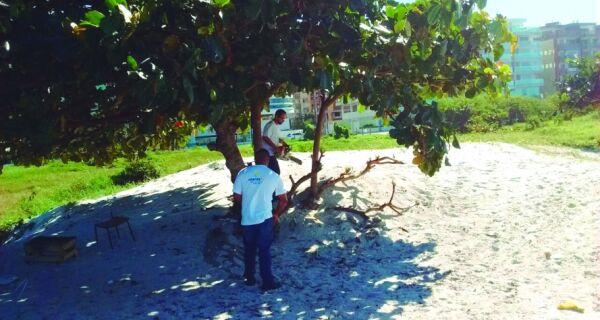 Secretaria do Ambiente de Cabo Frio faz retirada de árvores exóticas