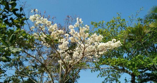 Primavera começa nesta quinta (22) e temperaturas devem subir