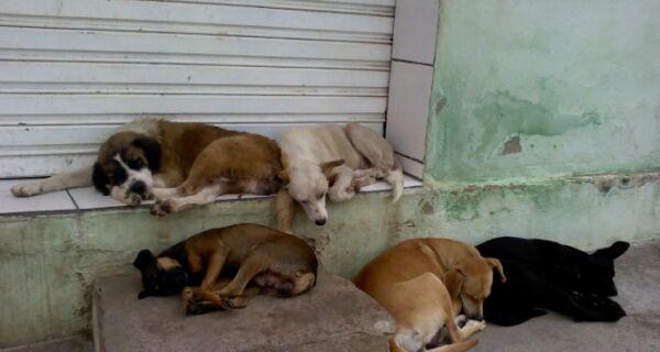 Evento beneficente ajuda animais abandonados da região