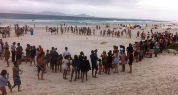 Leão Marinho encalhado vira atração na Praia do Forte