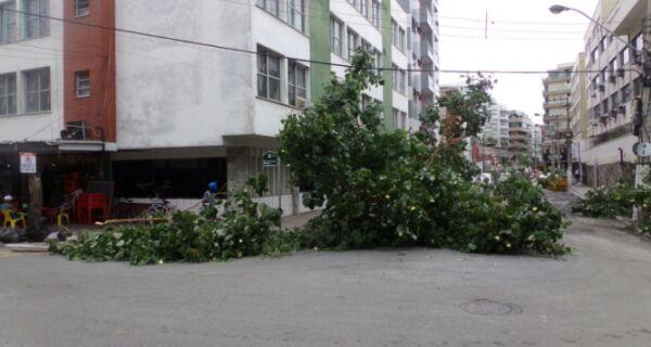 Chuva derruba árvore no centro de Cabo Frio
