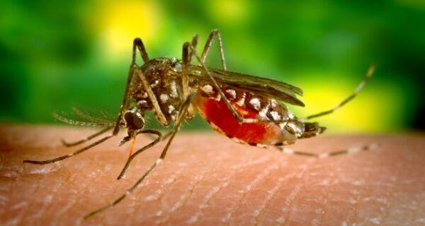 Prefeitura de São Pedro faz prevenção contra febre amarela
