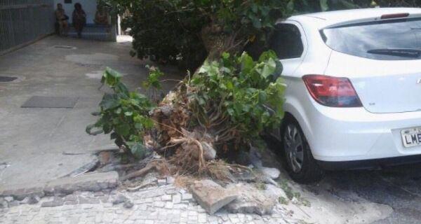 Árvore cai na Passagem, danifica carro e assusta pedestres