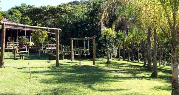 Dois macacos são encontrados mortos em Macaé