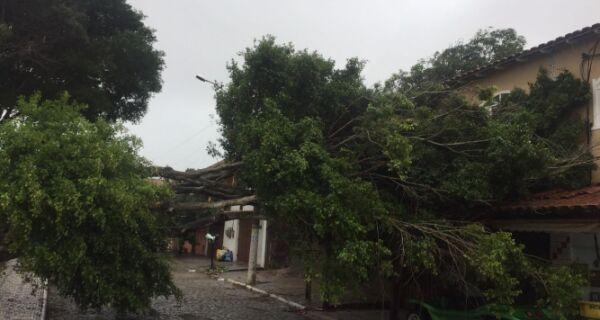 Chuva e vento forte derrubam árvores em Cabo Frio