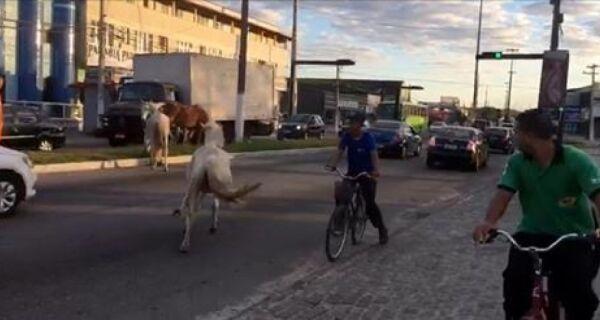 Cavalos soltos na pista assustam motoristas em Cabo Frio