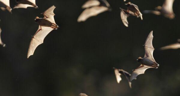 Inverno aumenta temor por ataque de morcegos