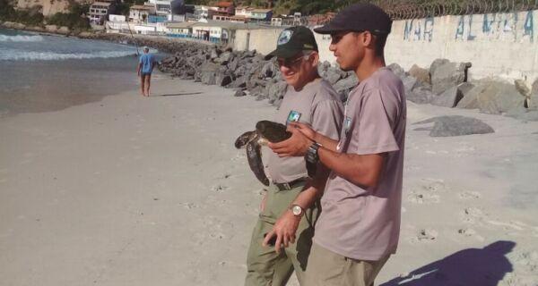 Cresce número de tartarugas marinhas resgatas em Arraial
