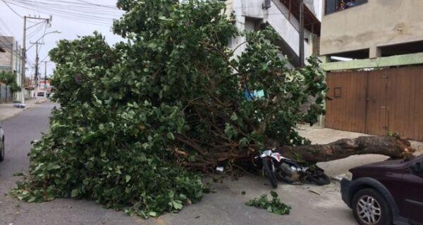 Vendaval causa estragos na região