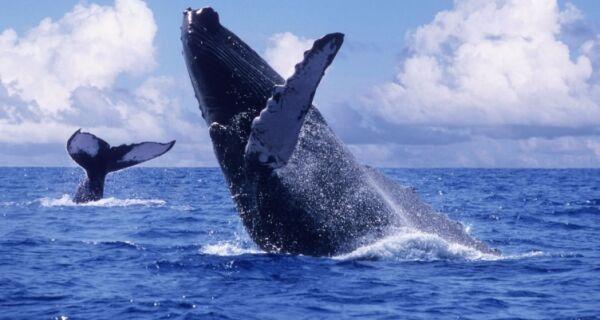 Baleias dão um show no inverno de Arraial do Cabo