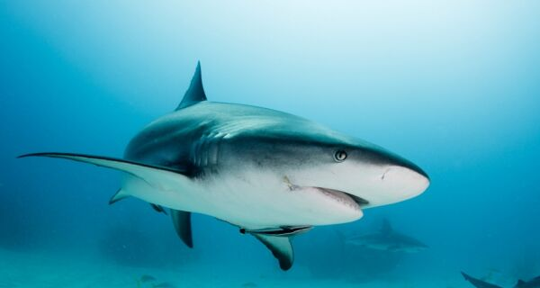 Suspeita de tubarão na Praia Grande ainda rende polêmica em Arraial
