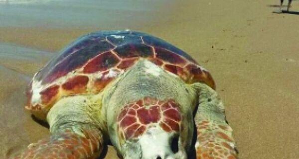 Mortandade de tartarugas em Búzios é mistério
