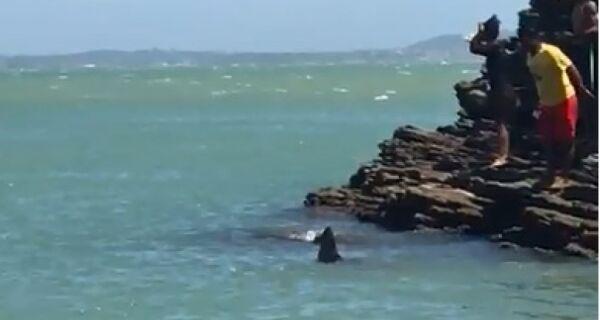 Possível presença de tubarões assustam a região